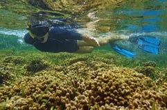 Snorkeler del hombre sobre el mar del Caribe de Panamá del arrecife de coral Fotografía de archivo libre de regalías