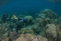 Snorkeler Diving on Reef Stock Images