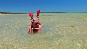 Snorkeler en bahía del tiburón almacen de metraje de vídeo
