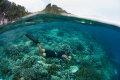 Snorkeler Exploring a Shallow Reef in Raja Ampat. A free diver explores a healthy reef in shallow water in Raja Ampat, Indonesia. This tropical region is home to Stock Photos