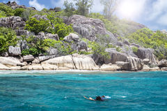 A snorkeler at an island coral reef with turtle. Seychelles. Royalty Free Stock Image