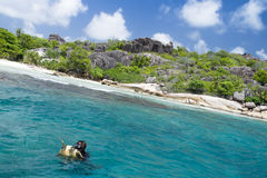 A snorkeler at an island coral reef with turtle. Seychelles. Stock Photography