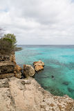 Snorkeler Off Rocky Coast of Curacao. Trees and rocks on windblown shore of Curacao Royalty Free Stock Image