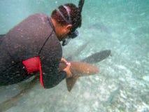 Snorkeler que sostiene un tiburón de enfermera en las islas de la bahía de Belice fotos de archivo