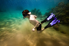 Snorkeler.  Red sea Stock Photo