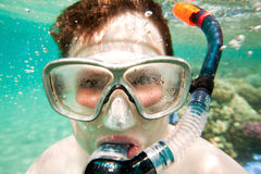 Snorkeler.  Red sea. Boys in the sea, snorkeling the Red sea Royalty Free Stock Photo