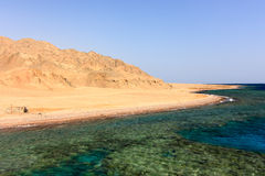 Snorkeler on a reef. A snorkeller over a remote coral reef next to the Egyptian desert royalty free stock image