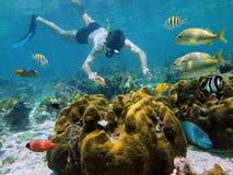 Snorkeler regardant une étoile de mer dans un récif coralien Photographie stock libre de droits