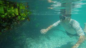 A snorkeler swims beside mangroves. A shot underwater of a diver swimming near mangroves. Dead mangroves is being examined by the snorkeler stock video