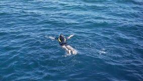 Snorkelers της Αιγύπτου στο νερό απόθεμα βίντεο