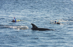 Snorkelers with dolphin in tropical sea Stock Photos
