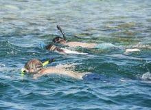 Snorkelers på den tropiska reven Royaltyfri Foto