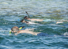 Snorkelers on tropical reef Royalty Free Stock Photo