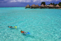 Snorkelers in turquoise water in Bora Bora Royalty Free Stock Photography