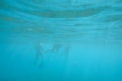 Snorkelers underwater Stock Image