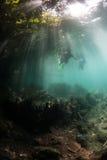Snorkelers y luz del sol en Raja Ampat Foto de archivo libre de regalías
