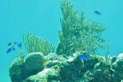 Snorkeling в коралловом рифе Багамских островов Стоковое Фото