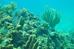 Snorkeling в рифе Багамск-коралла Стоковые Фотографии RF