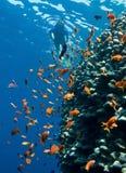 Snorkeling Fotografia de Stock Royalty Free