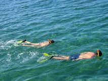 Snorkeling. A couple snorkeling in a ocean Royalty Free Stock Photography
