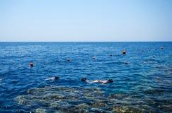 Snorkeling. People snorkeling in the sea in Sharm el sheik Stock Photos