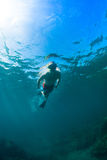 Snorkeling. Young man free diving and snorkeling on a lively reef stock photos