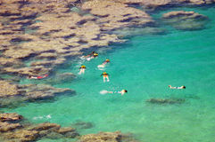 snorkeling Stock Foto