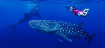 Девушка snorkeling с китовой акулой Стоковые Изображения