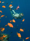 Snorkeling Foto de Stock