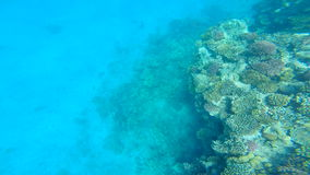 Snorkeling in the beautiful sea. near the corals and fish. cyan warm water. active lifestyle. rest and vacation. summer and tropic stock footage
