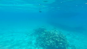 Snorkeling in the beautiful sea. near the corals and fish. cyan warm water. active lifestyle. rest and vacation. summer and tropic. Al. have fun stock video footage