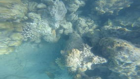 Snorkeling in the beautiful sea. near the corals and fish. cyan warm water. active lifestyle. rest and vacation. summer and tropic. Al. have fun stock footage