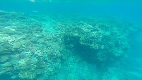 Snorkeling in the beautiful sea. near the corals and fish. cyan warm water. active lifestyle. rest and vacation. summer and tropic stock video footage