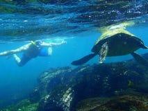 Snorkeling com uma tartaruga de mar Fotos de Stock Royalty Free