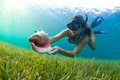 Snorkeling with a Conch shell. A young girl snorkeling in The Caribbean and finding a Conch shell Stock Photo