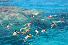 Snorkeling on coral reef Royalty Free Stock Image