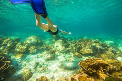 Snorkeling in coral reef. Young female snorkeling in tropical sea. Woman apnea swims in coral reef royalty free stock photo