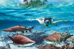 Snorkeling with dangerous bull sharks. Woment snorkeling in the tropical water with dangerous bull sharks Royalty Free Stock Images