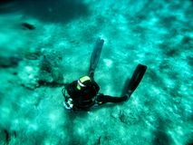 Snorkeling and diving in Red sea Royalty Free Stock Photo