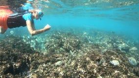 Snorkeling Felicite wyspa zbiory