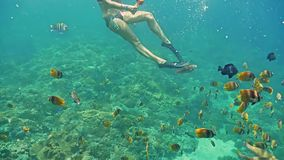 Snorkeling Fish Girl Reef Underwater Slowmotion stock video footage