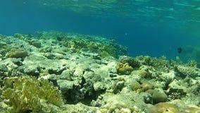 Snorkeling. Fish. Under water. stock footage