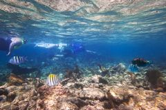 Snorkeling with fishes in the Caribbean Sea. Of Mexico Royalty Free Stock Photography