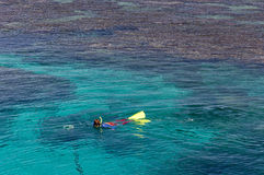 Snorkeling at the Great Barrier Reef Royalty Free Stock Images