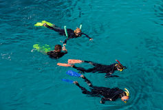 Snorkeling at the Great Barrier Reef Royalty Free Stock Image