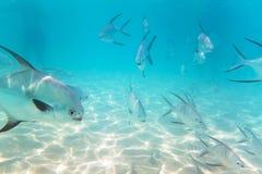 Snorkeling i det karibiska havet av Mexico Royaltyfri Foto