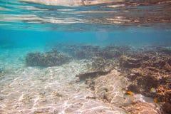 snorkeling Kleurrijke mening van onderwaterwereld Dode koraalriffen, overzees gras, wit zand en turkoois water stock afbeeldingen