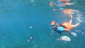 Snorkeling kobieta rozszczepiony widok zbiory wideo
