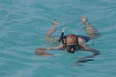 Snorkeling in the lagoon. Closeup of a snorkeler in a lagoon Stock Images