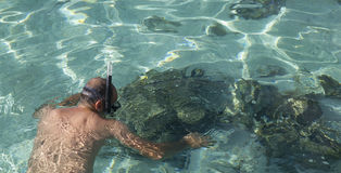 Snorkeling man Stock Images